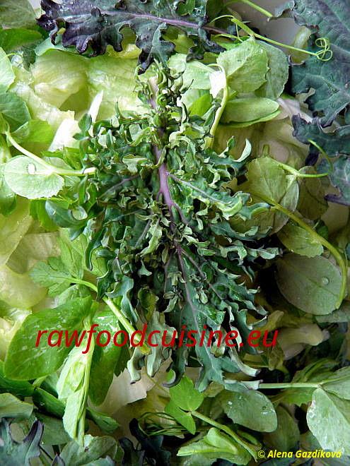 Šaláty zčerstvej zeleniny