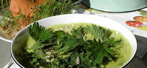 Raw vegan polievka smedvedím cesnakom ažihľavou