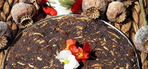 Raw vegan jablkovo-makový koláč