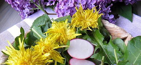 Jarný šalát z púpavy